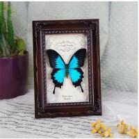 创意礼品真蝴蝶标本 天堂凤蝶 欧式纯实木雕花框 情人节礼物 其他长方形尺寸
