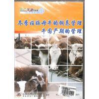 冬季妊娠母牛的饲养管理牛围产期的管理DVD