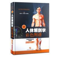 人体解剖学彩色图谱-第2版 柏树令,刘元健,李洪鹏 9787547822951 上海科学