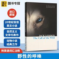 The Call of the Wild 野性的呼唤 英文原版小说 柯林斯经典文学 Jack London 杰克伦敦 全