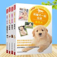 和爱犬一起生活:边境牧羊犬+吉娃娃+贵宾犬+金毛犬 4册 宠物狗日常饮食 驯养方法技巧大全养狗教程一本通养狗的书籍