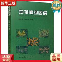 地被植物图谱,中国建筑工业出版社,9787112086825【新华书店】