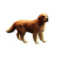 男女孩礼物儿童仿真动物模型狗狗玩具宠物金毛犬圣伯纳苏牧拳师犬