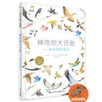 神奇的大迁徙候鸟的春来秋去 精装版 候鸟科普图画书 鸟类书籍