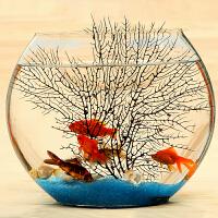 超白扁形圆形水培铁树金鱼缸创意热带鱼桌面迷你小型玻璃鱼缸 超