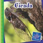 【预订】Cicada