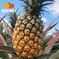 海南金钻凤梨5斤(2-3个)新鲜当季水果手撕无眼菠萝树上熟整箱