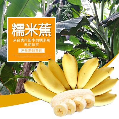 【贵阳馆】贵州特产册亨糯米蕉香蕉1.5kg_3斤装 扶贫爱心蕉农家自种县长代言不打药天然水果生鲜助农扶贫 香糯鲜果 县长代言