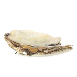 【烟台特产馆】乳山鲜活生蚝2.5kg  20-30个 新鲜海蛎子牡蛎