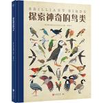 探索神奇的鸟类