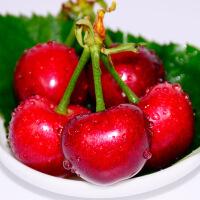【山东特产】烟台大樱桃车厘子红灯先锋新鲜水果6斤(20-25MM) 包邮