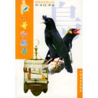 八哥和鹩哥,王增年 ,莫玉忠 王增年著,中国农业出版社9787109061088