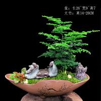 文竹盆栽植物微景观室内花盆陶瓷净化空气四季常青盆景造型小创意 含盆