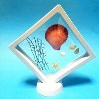 海螺贝壳相框手工艺品桌面摆件家居装饰创意生日礼物