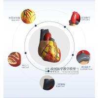 1:1人体心脏模型B超彩超声心内科心脏解剖教学模型自然大心脏