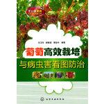 无公害果树优质高效栽培丛书--葡萄高效栽培与病虫害看图防治