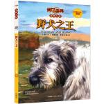 传世今典.动物小说5:野犬之王