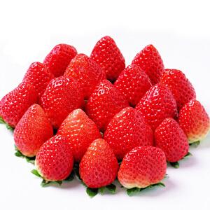 【烟台特产馆】新鲜草莓水果奶油味烟台特产现摘现发头茬果900g