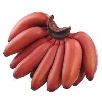 红皮香蕉福建土楼美人蕉新鲜水果5斤装