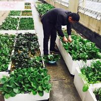 【支持礼品卡】乐栽阳台种菜盆加厚种植箱长方形花盆花箱花盆种植槽花槽种植设备q8w