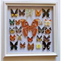 蝴蝶标本 真蝴蝶真标本 教学 家居装饰 婚庆 生日礼物 其他正方形尺寸独立