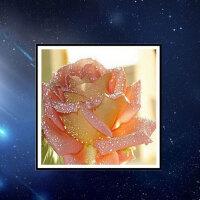 物有物语 十字绣 外贸钻石画卧室欧式花卉 滴水玫瑰家居装饰画十字绣新款