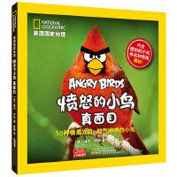 愤怒的小鸟真面目-50种横眉立目.怒气冲冲的小鸟-内含愤怒的小鸟学名和性格揭秘!