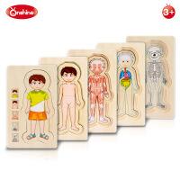 onshine 多层拼图男女孩人体结构 儿童智力木质玩早教益智玩具