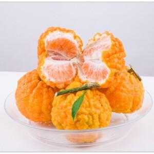 香格里拉尼西特产新鲜黄果季现摘现发2.5kg装