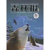 冬-森林报(美绘版)