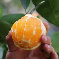 【湖南特产】麻阳冰糖橙 产地直供 坏一颗赔一颗 5斤装/箱(约23个)