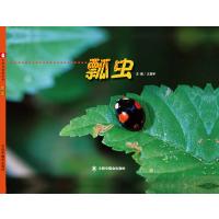 中国原创图画书:瓢虫