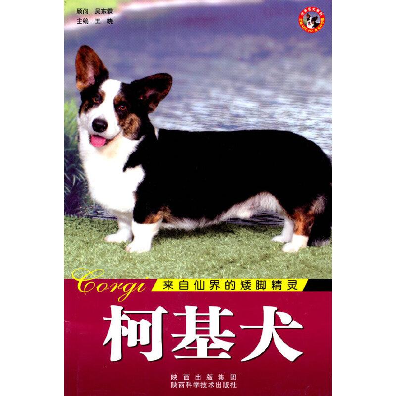 世界名犬-柯基犬