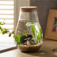 创意微生态瓶鱼虾螺 办公室桌面迷你水族箱小鱼缸微景观微景缸