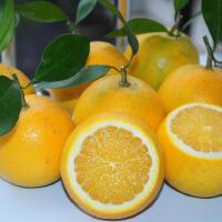 【湖南特产】黔阳冰糖橙 冰糖般的爽滑 甜美口感儿童冰糖橙 5斤果径50-55包邮