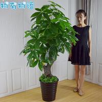 物有物语 仿真树 发财树套装客厅假树落地客厅摆件塑料绿色树木大型植物盆栽中国风大厅装饰品