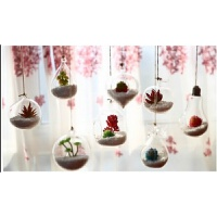 吊起来的花瓶创意悬挂玻璃小花瓶仿真多肉盆栽假花家居客厅装饰挂饰玻璃吊瓶