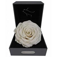 双子座永生花礼盒进口黄色玫瑰七夕情人节生日送女友巨型干花礼物
