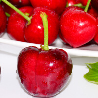 【山东特产】樱桃美早车厘子烟台大樱桃新鲜水果5斤现摘现发包邮
