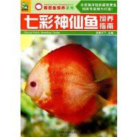 七彩神仙鱼饲养指南