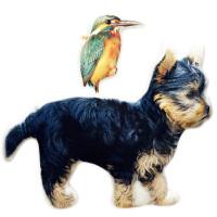 异形宠物抱枕定制来图照片订做diy猫猫狗狗兔鸟纪念动物创意抱枕
