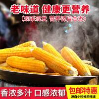 【现摘现发】山东老式黄玉米棒5斤装 新鲜农家笨玉米非转基因非甜糯玉米
