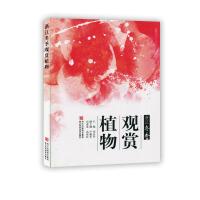浙江冬季观赏植物