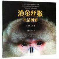 滇金丝猴生活图解