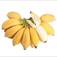 苹果蕉广东香蕉粉蕉小米蕉芭蕉新鲜水果5斤装