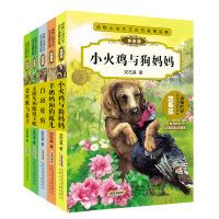 动物小说大王沈石溪精品集5册 太阳鸟和眼镜王蛇 小火鸡与狗妈妈 *与* 羊