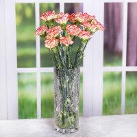 送给妈妈的生日礼物鲜花 康乃馨鲜花云南批发花束昆明基地直供直批水养鲜切花送妈妈礼物