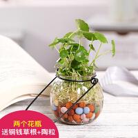 创意简约水培铜钱草花瓶玻璃透明水养花盆风信子绿萝植物插花瓶 中等