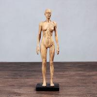人体肌肉模型 骨骼绘画CG参考标版解剖美术临摹雕塑仿真 人体模型1 水晶黄 女皮肤肌肉黄色