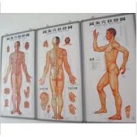 中医针灸穴位图人体经络穴位图男性标准经络图艾灸刮痧全套大挂图